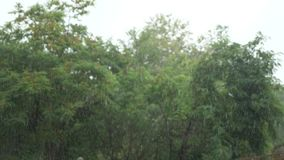 Pouring tropical rain. drops of rain against the background of green trees. 4k, slow motion stock video footage