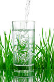 Pouring water into glass on background of green grass isolated Stock Photography