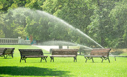 Pouring water in the park against heatwave and high temperature. City authorities decied to pour water in the park against heatwave and preventing the grass from Royalty Free Stock Photos