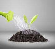 Pouring watering can on plant water. Pouring watering can on the plant water royalty free stock images