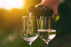 Pouring white wine into glasses royalty free stock image