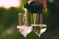 Pouring white wine into glasses royalty free stock photo