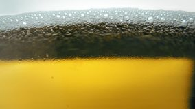 Pouring yellow beer on white background. Barm, bubble fresh drinking, foamy golden alcohol stock footage
