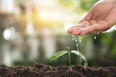 Pouring a young plant from watering can. Gardening and watering. Plants stock image