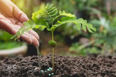 Pouring a young plant from watering can. Gardening and watering. Plants stock photo