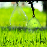 Pouring young plants. From small Sprinkler spraying Stock Photo