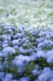 Pourpre de fleurs petit photographie stock libre de droits