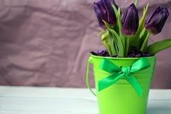 Pourpre de tulipes : félicitations, le 8 mars jour international du ` s de femmes, le 14 février jour du ` s de Valentine, vacanc Image stock