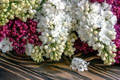 Pourpre et blanc lilas sur un conseil en bois Photographie stock libre de droits