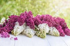 Pourpre et blanc lilas sur un conseil en bois Image stock