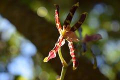 Pourpre et orchid?e sauvage jaune image libre de droits