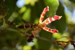 Pourpre et orchid?e sauvage jaune photographie stock libre de droits