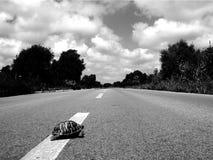 Pourquoi a fait la croix de tortue la route Images libres de droits