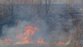 Pourrait une conséquence des incendies de forêt L'herbe sèche brûle seulement l'herbe verte poussée banque de vidéos