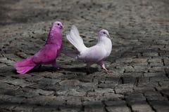 Poursuite colorée d'oiseaux Photos libres de droits