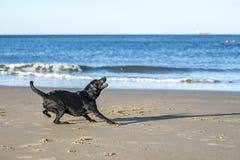 Poursuivez être prêt pour attraper une boule sur la plage Images stock