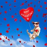 Poursuivez accrocher sur le ballon en air pour le jour de valentines Photo stock