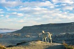 Poursuivez contempler la vallée étonnante de Cappadocia, Turquie image libre de droits