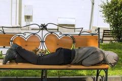 Poursuivez et propriétaire bu endormi sur le banc soleil images libres de droits