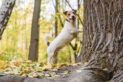 Poursuivez fatigué pour chasser le chat ou l'écureuil se tenant sous l'arbre photographie stock