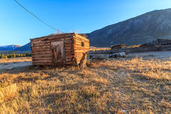 Poursuivez garder la ferme dans un village dans les montagnes d'Altai Images libres de droits