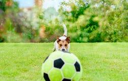 Poursuivez jouer à la pelouse de jardin avec du ballon de football du football de jouet photo stock