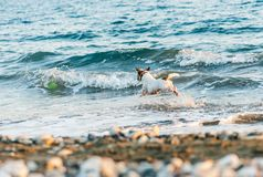 Poursuivez jouer avec le disque de vol à la plage de mer au jour chaud d'été photos libres de droits