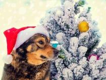 Poursuivez l'arbre de Noël proche extérieur de port de chapeau de Santa Photo stock