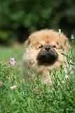 Poursuivez la bouffe de bouffe d'animal familier Photo libre de droits