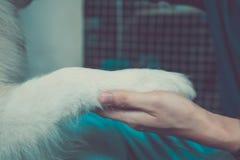 Poursuivez la main secouant avec l'humain - amitié et concept de formation d'animal familier Photographie stock libre de droits