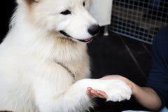Poursuivez la main secouant avec l'humain - amitié et concept de formation d'animal familier Photos libres de droits