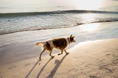 Poursuivez la marche sur la plage pendant le matin Photos stock
