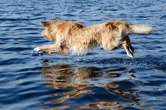 Poursuivez la natation Images stock