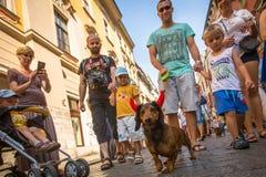 Poursuivez la partie dans le 22ème défilé annuel de teckel (Marsz Jamnikow) sur la place principale du marché Images stock