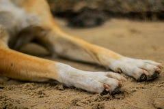 Poursuivez la patte du ` s sur la plage de sable Photographie stock