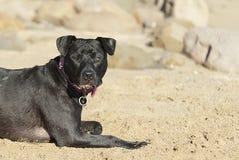Poursuivez la pose sur le sable Photographie stock libre de droits