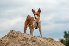 Poursuivez la position sur un tas du sable et du regard vers le bas Images stock
