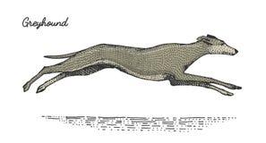 Poursuivez la race gravée, illustration tirée par la main de vecteur dans le style de scratchboard de gravure sur bois, espèces d Image libre de droits