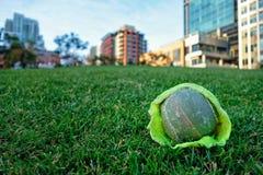 Poursuivez la salive sur une balle de tennis en parc près San Diego du centre de ville photo libre de droits