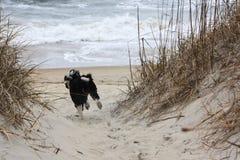 Poursuivez le fonctionnement vers l'océan sur le sable Photographie stock