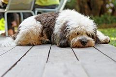 Poursuivez le sommeil Photographie stock libre de droits