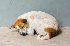 Poursuivez le sommeil Image libre de droits