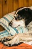 Poursuivez le sommeil Photo libre de droits