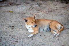 Poursuivez le sommeil sur la rue, sommeil sans abri de chien Images stock