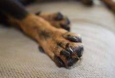 Poursuivez les pattes sur un sofa, une couleur noir-brune Photographie stock