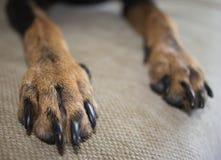 Poursuivez les pattes sur un sofa, une couleur noir-brune Photos libres de droits