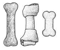 Poursuivez mâcher l'illustration d'os, dessin, gravure, encre, schéma, vecteur illustration de vecteur