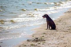 Poursuivez observer la vue de vacances d'été sur la plage, pensant à la vie Photo libre de droits