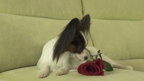 Poursuivez Papillon avec la rose de rouge dans l'amour le jour de valentines Photos stock