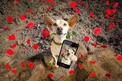 Poursuivez prêt à faire une promenade sur des valentines photos stock